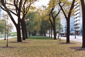 Chicago Trees